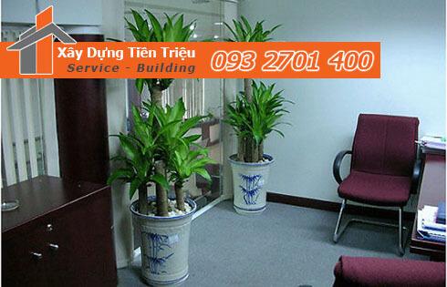 Tại sao nên thuê cây xanh văn phòng TPHCM ?