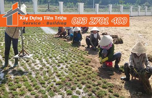 Bật mí cách trồng cỏ lông heo như thế nào cho đúng kỹ thuật ?