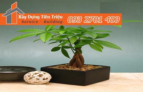 Địa chỉ bán cây cảnh bonsai cây xanh văn phòng Huyện Bình Chánh
