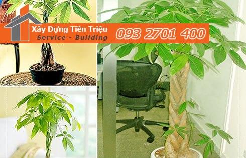 Địa chỉ bán cây cảnh bonsai cây xanh văn phòng Huyện Cần Giờ