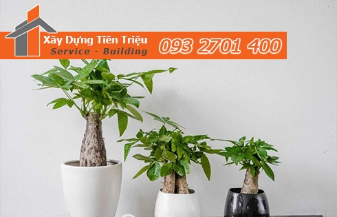 Địa chỉ bán cây cảnh bonsai cây xanh văn phòng Huyện Củ Chi