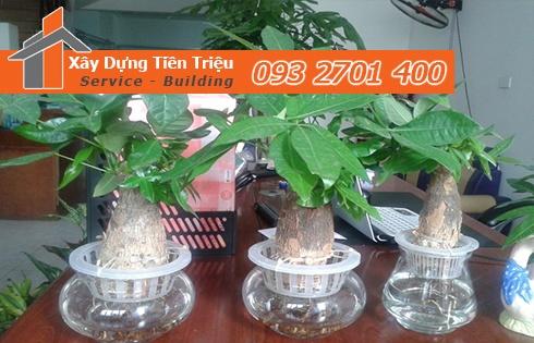 Địa chỉ bán cây cảnh bonsai cây xanh văn phòng Huyện Hóc Môn