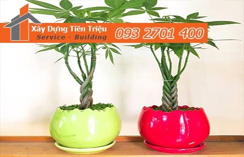 Địa chỉ bán cây cảnh bonsai cây xanh văn phòng Quận 12 giá rẻ