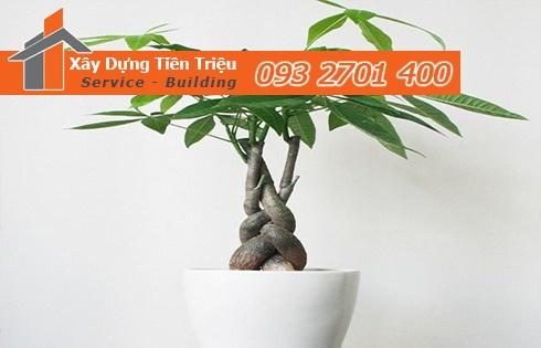 Địa chỉ mua bán cây cảnh bonsai cây xanh văn phòng Quận 2 giá rẻ