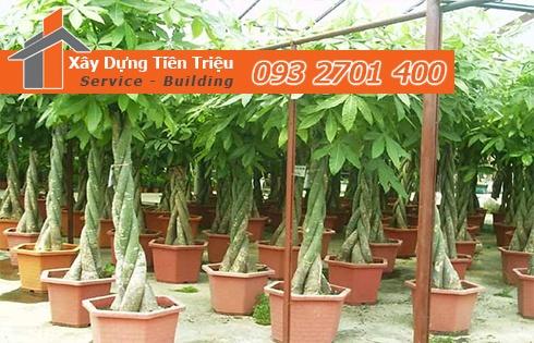 Địa chỉ mua bán cây cảnh bonsai cây xanh văn phòng Quận 3 giá rẻ