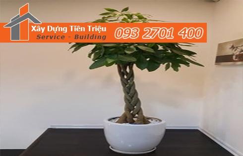 Địa chỉ mua bán cây cảnh bonsai cây xanh văn phòng Quận 4 giá rẻ