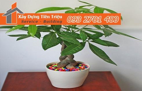 Địa chỉ mua bán cây cảnh bonsai cây xanh văn phòng Quận 6 giá rẻ
