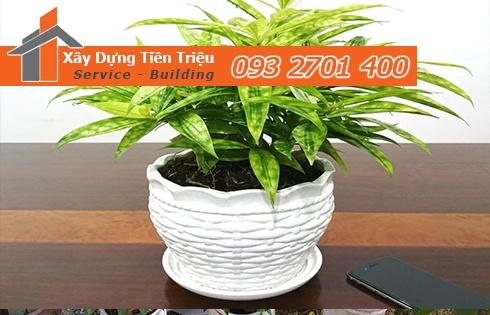 Địa chỉ mua bán cây cảnh bonsai cây xanh văn phòng Quận 8 giá rẻ