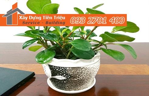 Địa chỉ mua bán cây cảnh bonsai cây xanh văn phòng Quận 9 giá rẻ