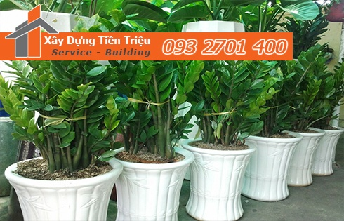 Địa chỉ bán cây cảnh bonsai cây xanh văn phòng Quận Bình Tân