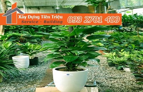 Địa chỉ bán cây cảnh bonsai cây xanh văn phòng Quận Bình Thạnh