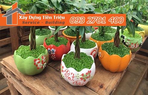 Địa chỉ bán cây cảnh bonsai cây xanh văn phòng Quận Gò Vấp