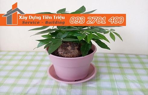 Địa chỉ bán cây cảnh bonsai cây xanh văn phòng Quận Phú Nhuận