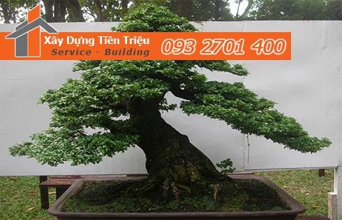 Địa chỉ bán cây cảnh bonsai cây xanh văn phòng Quận Tân Phú