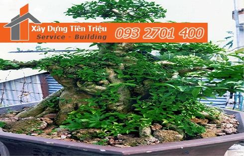 Bảng giá mua bán cây xanh văn phòng cây Bonsai tại Đồng Nai.