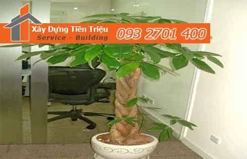 Bảng giá mua bán cây xanh văn phòng cây cảnh bonsai huyện Bình Chánh hiện nay.