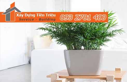 Bảng giá mua bán cây xanh văn phòng cây cảnh bonsai Huyện Cần Giờ.