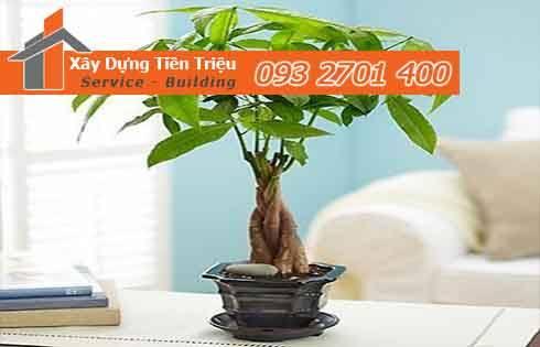 Địa chỉ uy tín cung cấp cây xanh văn phòng cây Bonsai đẹp Huyện Củ Chi.