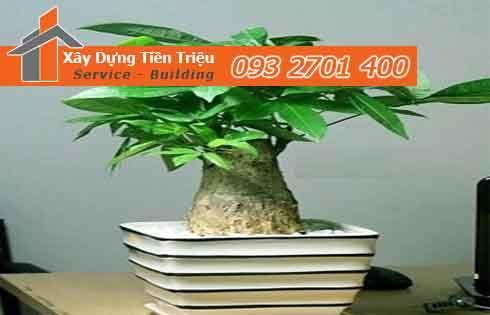 Bảng giá mua bán cây xanh văn phòng cây Bonsai tại huyện Hóc Môn.