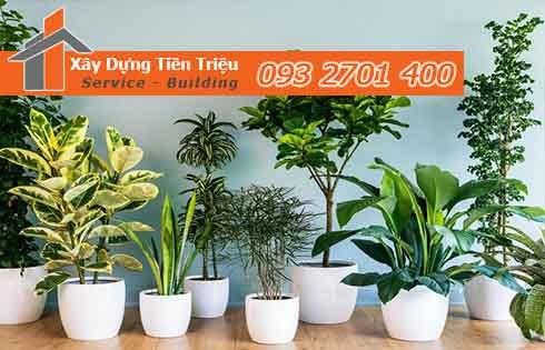 bảng giá mua bán cây cảnh Bonsai Huyện Nhà Bè