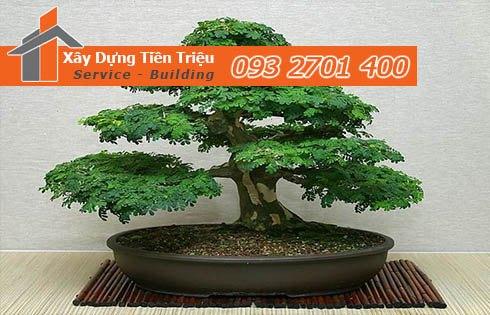 Bảng giá mua bán cây xanh văn phòng cây cảnh bonsai tại Quận 12.
