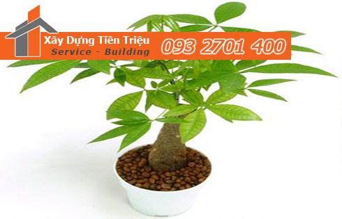 Bảng giá mua bán cây cảnh bonsai ở Quận 3 hiện nay.