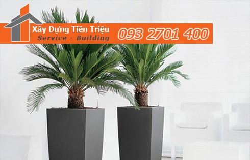 Bảng giá mua bán cây xanh văn phòng cây cảnh bonsai Quận 8.