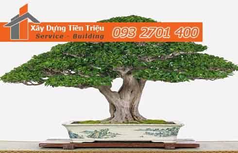 Bảng giá mua bán cây xanh văn phòng cây cảnh bonsai Quận Bình Tân.