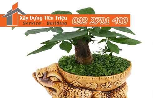 Bảng giá cây xanh văn phòng cây cảnh bonsai ở Quận Bình Thạnh.
