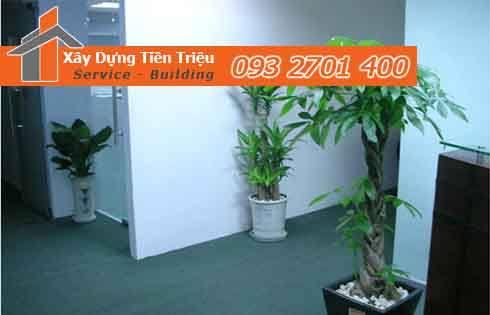 Bảng giá mua bán cây xanh văn phòng cây cảnh Bonsai Quận Phú Nhuận.