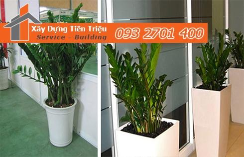 Bảng giá mua bán cây xanh văn phòng cây cảnh Bonsai tại Bình Dương.