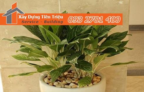 Bảng giá mua bán cây xanh văn phòng cây cảnh Bonsai Quận Tân Phú.