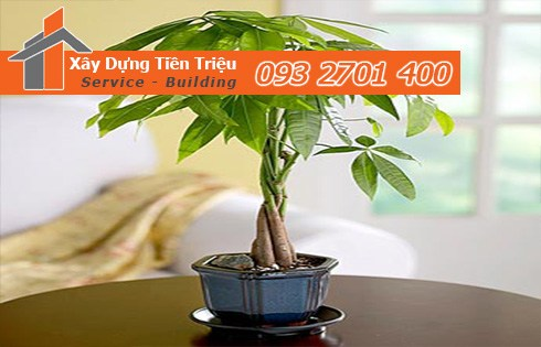 Bảng giá mua bán cây xanh văn phòng cây cảnh bonsai tại Quận Thủ Đức.