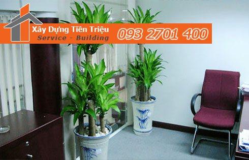 Địa chỉ bán cây cảnh bonsai cây xanh văn phòng Bình Dương