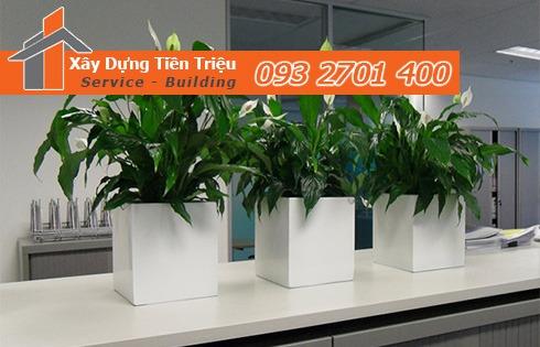 Địa chỉ bán cây cảnh bonsai cây xanh văn phòng Đồng Nai